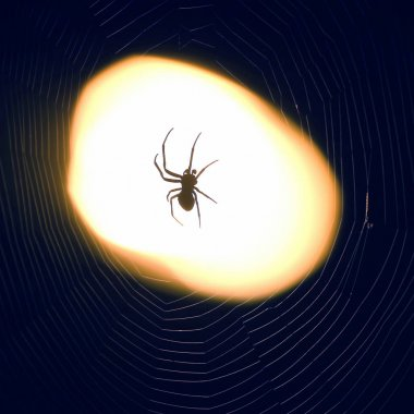 spider sitting on a web at night under the light of a lantern