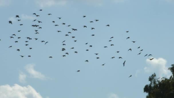 Zdarma video z velkých ptáků