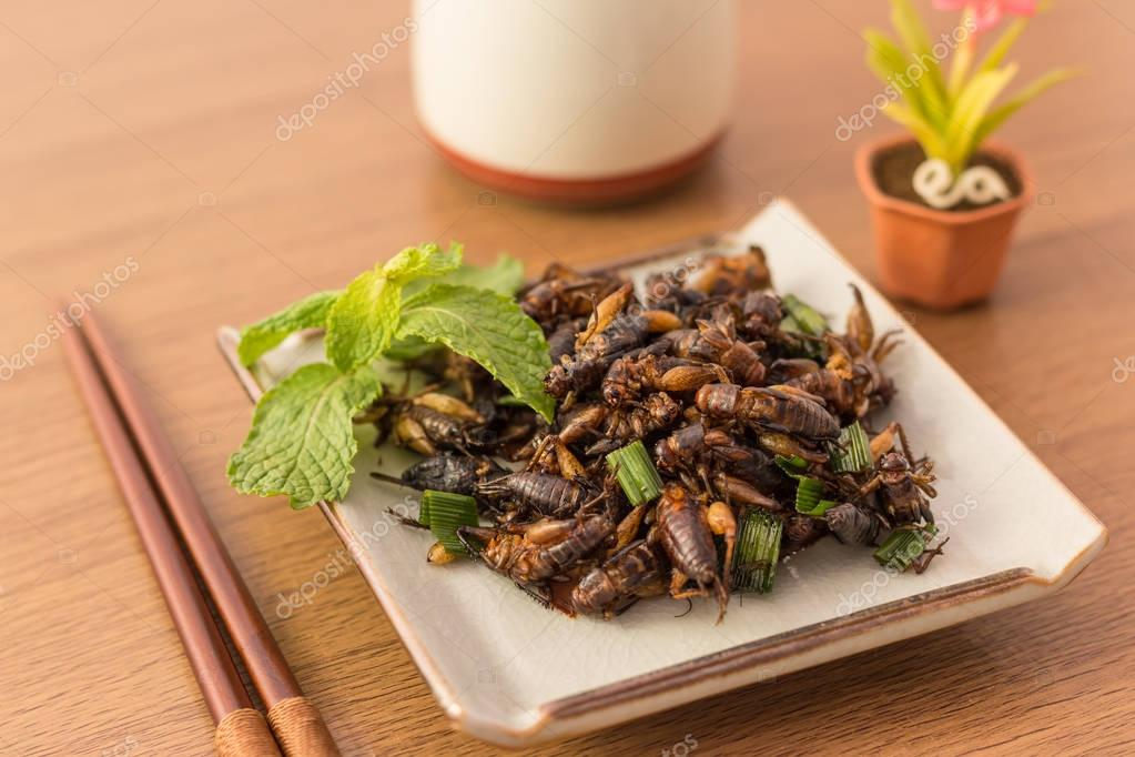 how to kill cricket insect