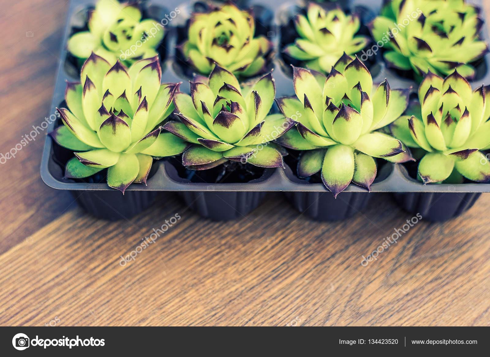 Plantas Em Vasos E Recipientes Suculentas Em Vasos Decoração De