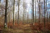 Fotografia Forest / foresta paesaggio / percorso nella foresta