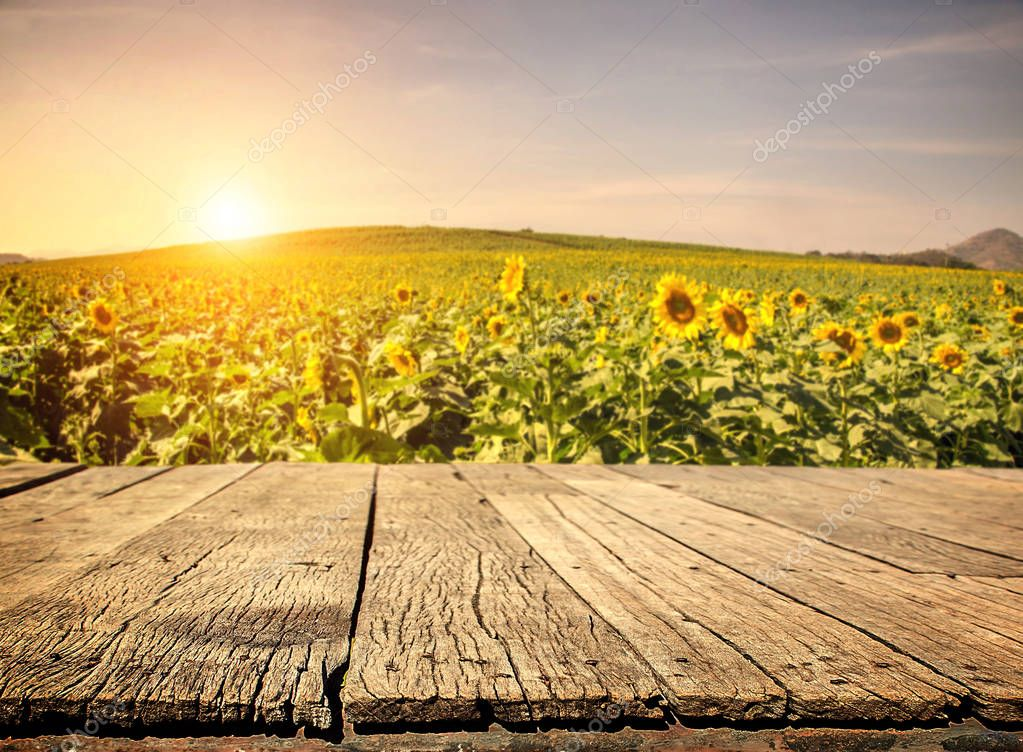 Empty wooden plank with Sunflower field background
