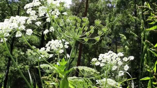 Bílí motýli poletovat kolem kvetoucích rostlin