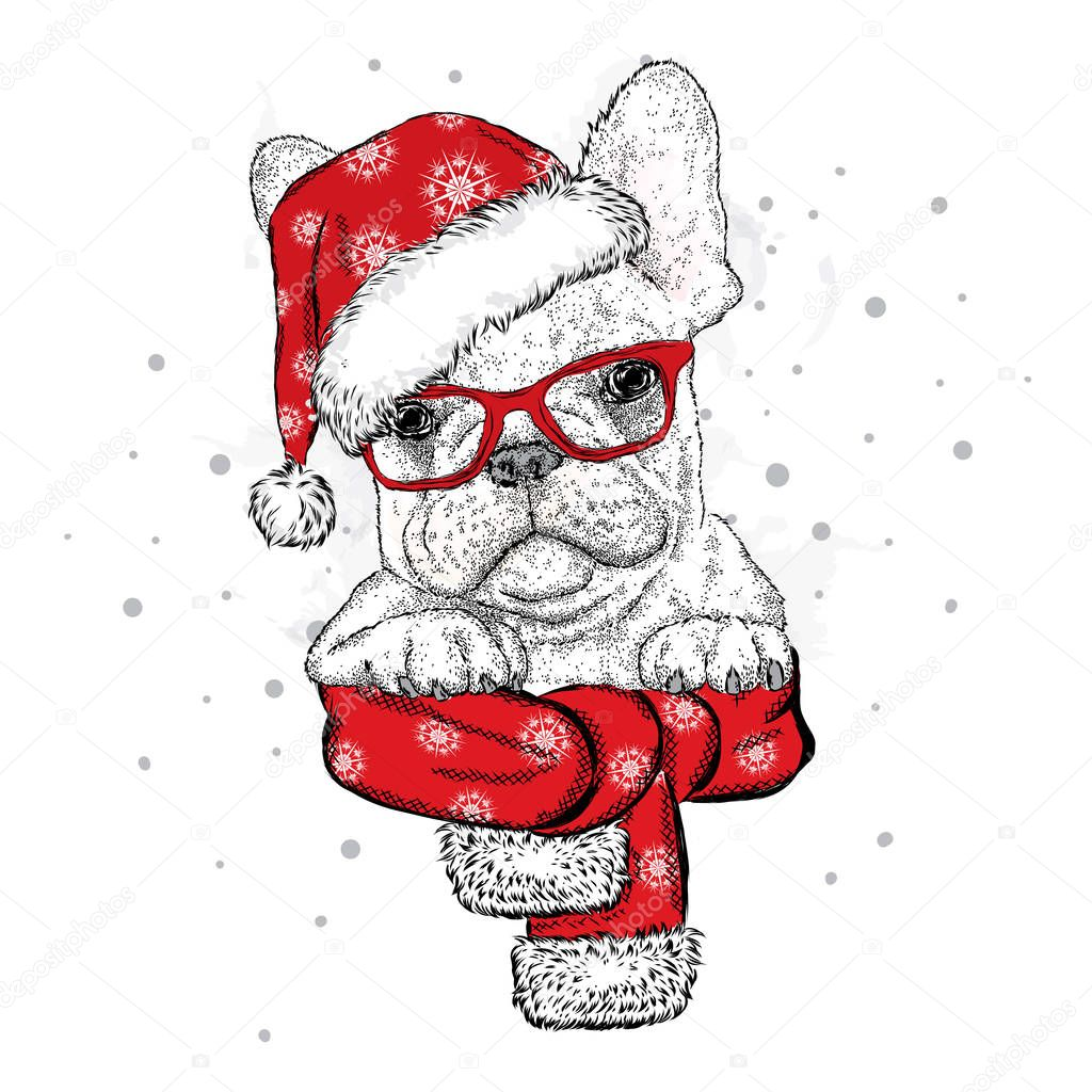 French bulldog in a Christmas hat and sunglasses. Vector ...