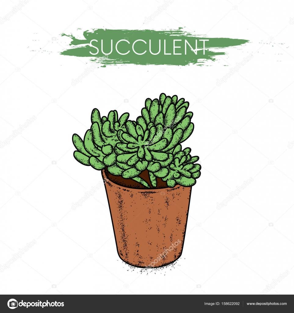 Sukulenty W Glinianych Garnków Kaktusy W Wektor Ilustracja