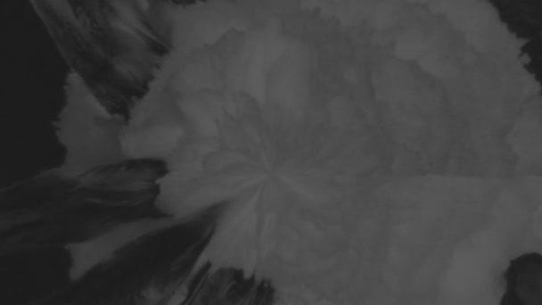 Nagy csepp fekete festékkel esik a fehér felület és a folt, így nagy blot és így nagy vízcseppek blot-okról készült. Lövés a lassú mozgás. Az alfa-csatornát a luma Matt Ver-4