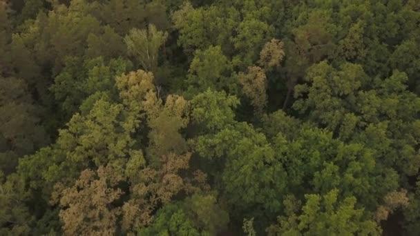 Čerstvý zelený les. Listnaté a jehličnaté stromy. Letecký pohled