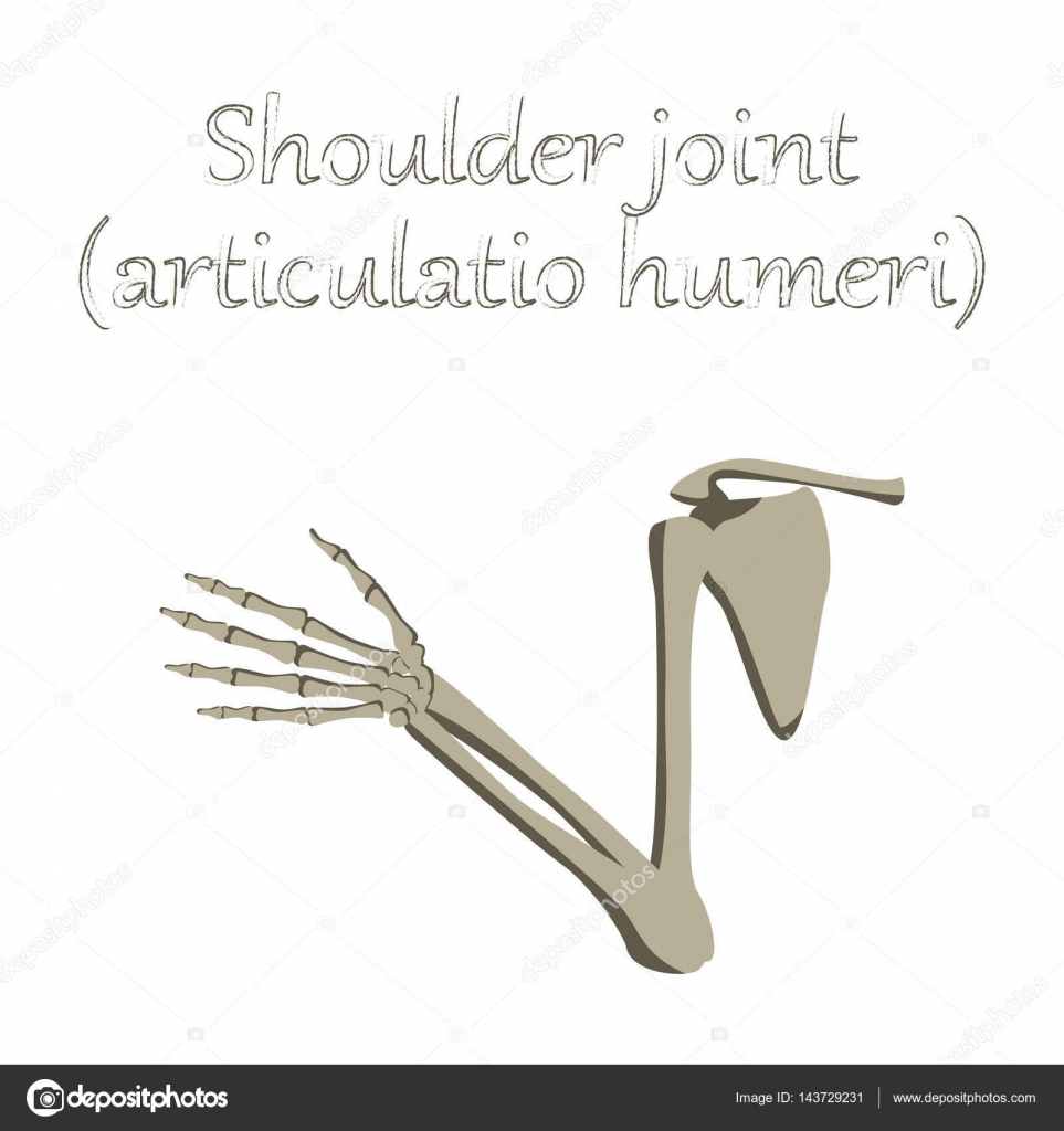 Organ des Menschen-Symbol im flachen Stil Schultergelenk ...