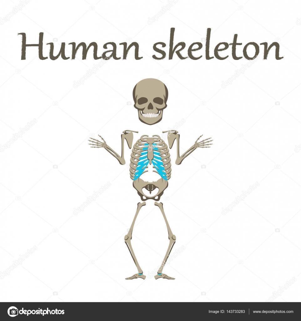 Organ des Menschen-Symbol im flachen Stil menschliches Skelett ...