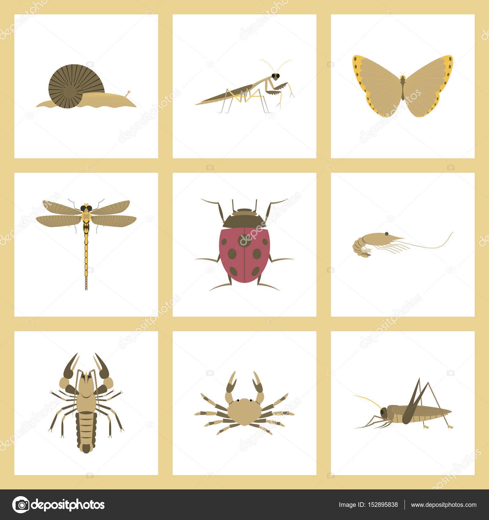 Montaje plano ilustraciones error caracol mariposa libélula ...