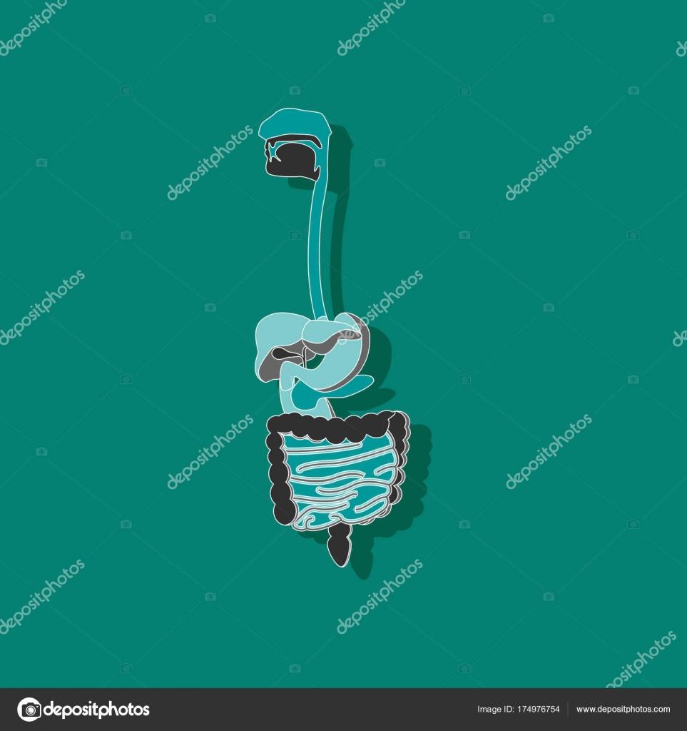 etiqueta engomada de papel sistema digestivo sobre fondo con estilo ...