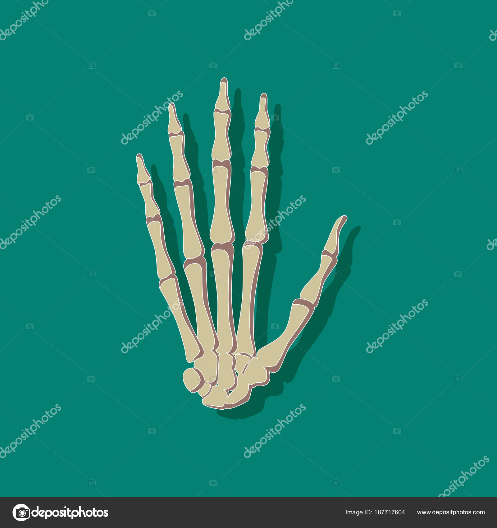 Handgelenk Knochen Papier Aufkleber auf stilvollen Rahmen ...