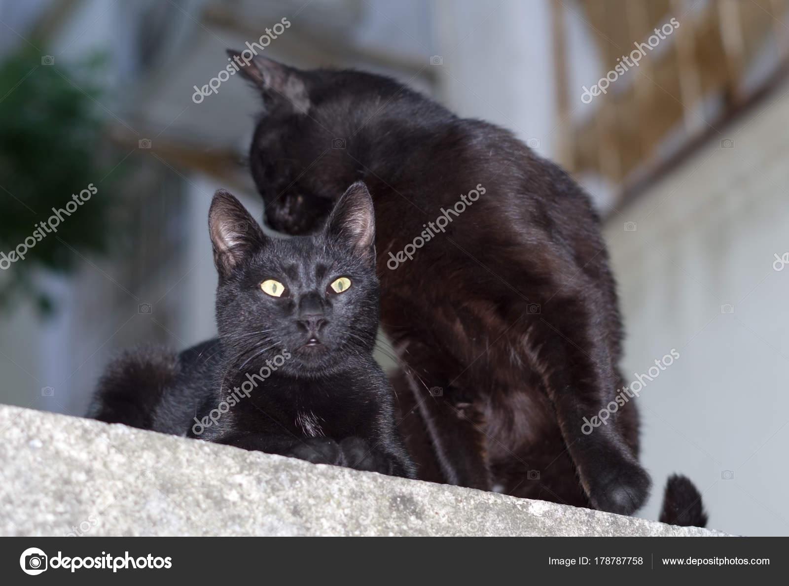 černé kočičí kategorie
