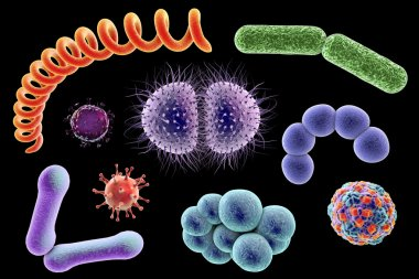 Microbes of different shapes