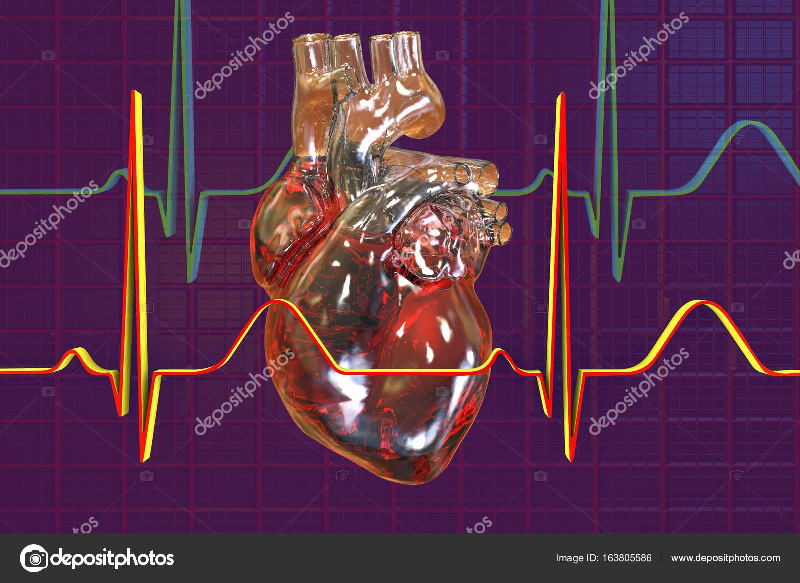 Gemütlich Bilder Des Menschlichen Herzens Bilder - Menschliche ...