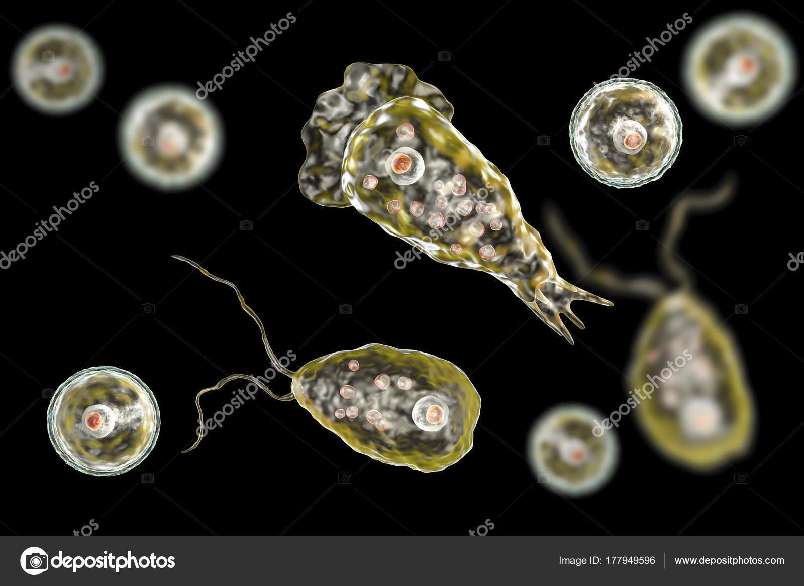 nigleria parazita