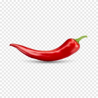 Red hot natural chili pepper pod realistic image with shadow for culinary products and recipes vector illustration