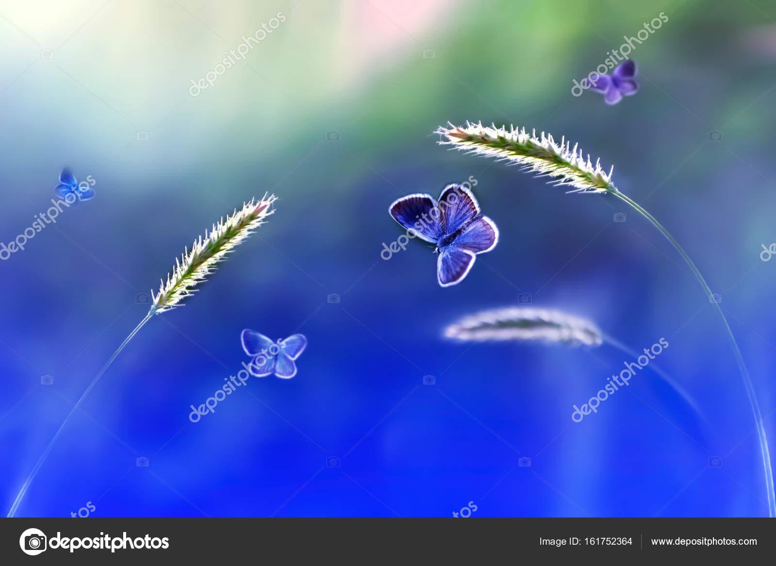 Motyle W Locie Na Tle Dzikiej Przyrody W Odcieniach Błękitu