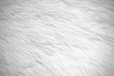 White fur background. Stock Photo
