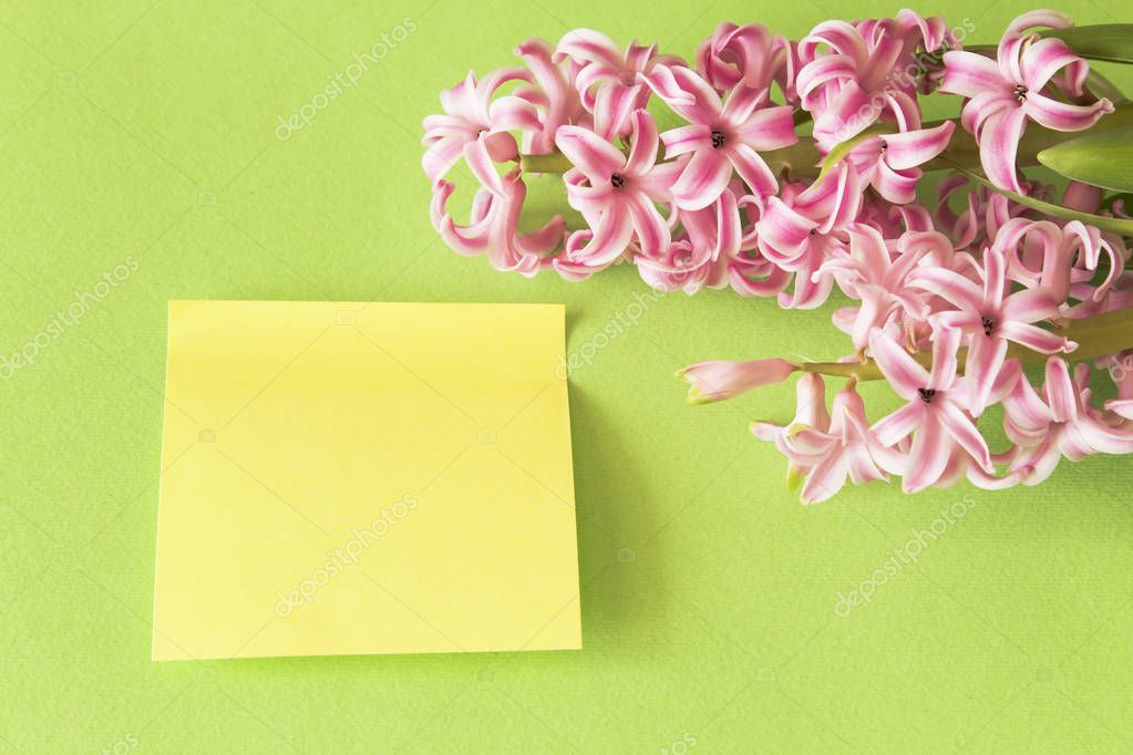 Hyacinth on a Green Background with  Sheet of Notebook