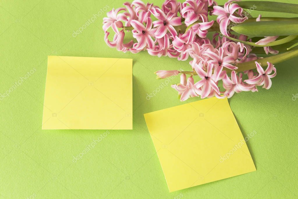 Hyacinth on a Green Background with Two Sheets of Notebook