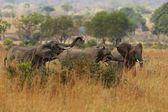 Sloni v prostředí krásné přírody