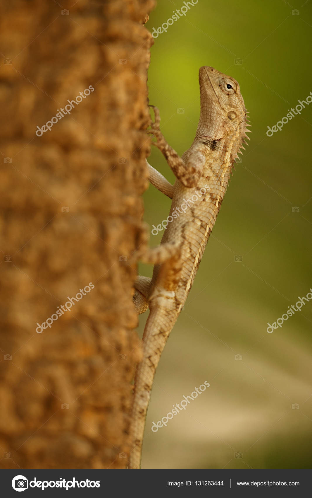 garden lizard on the tree — Stock Photo © Photocech #131263444