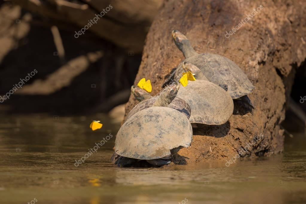turtles and butterflies in nature habitat