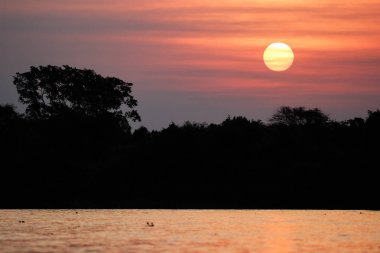 Beautiful sunset in northern Pantanal