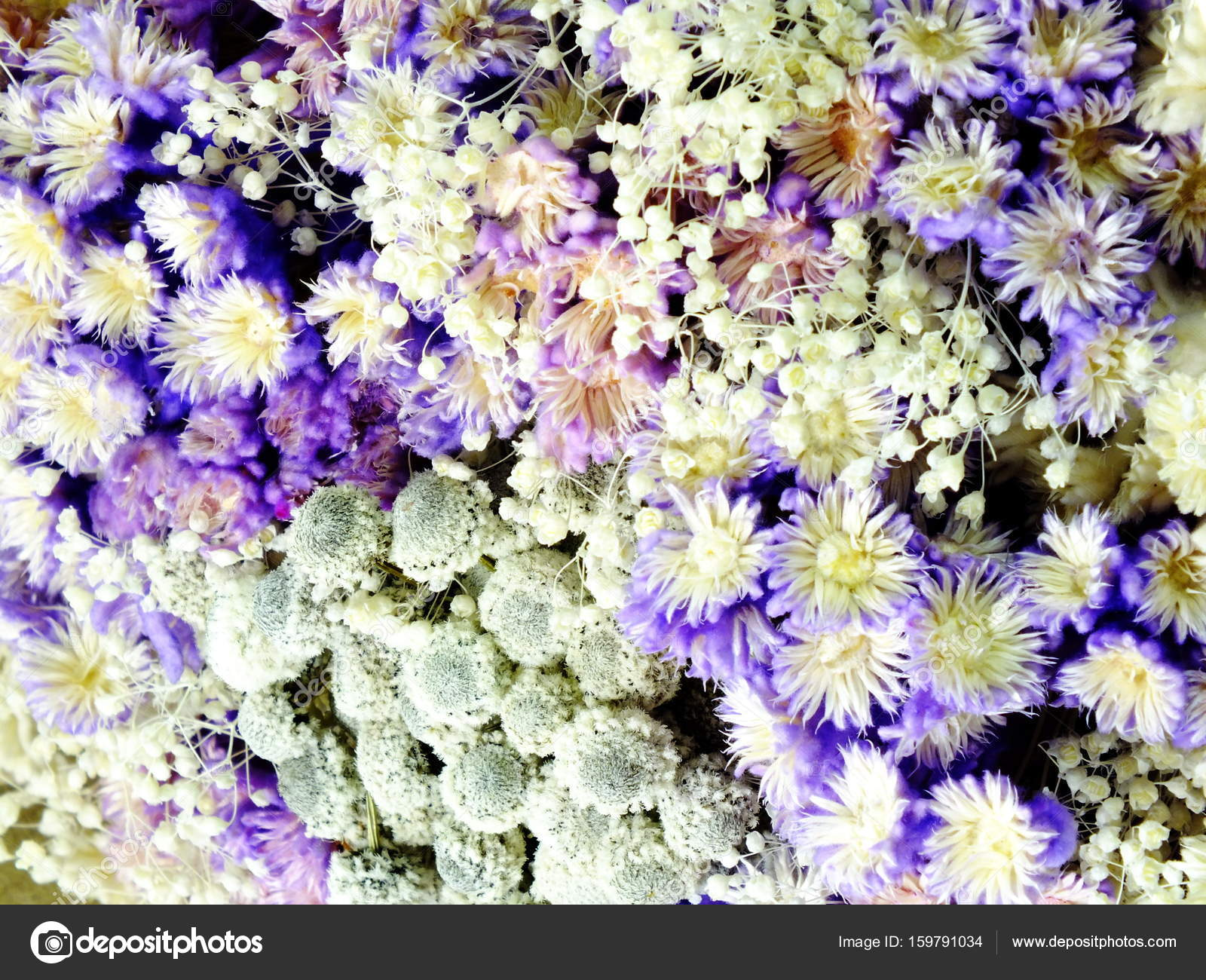 Bouquet Dried Flowers Isolate White Background Stock Photo