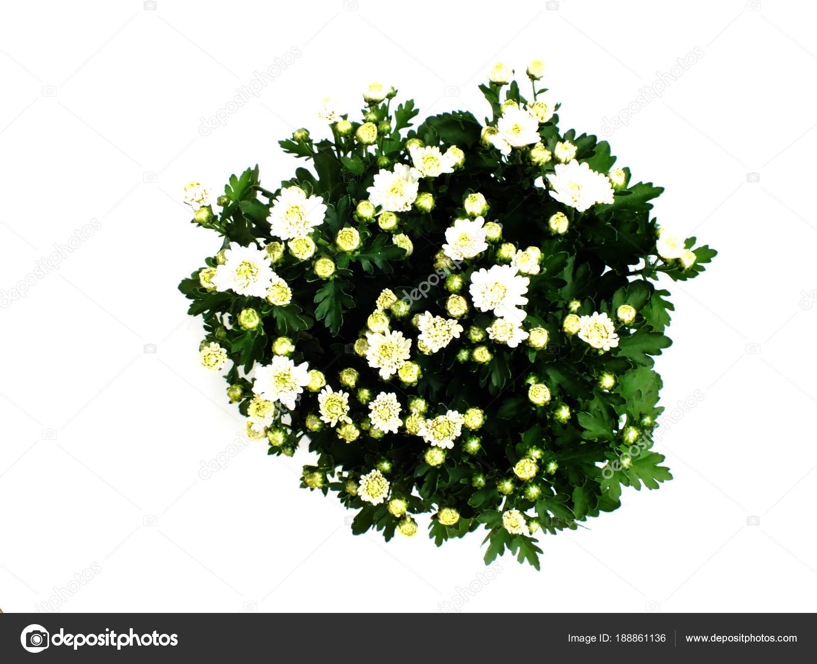 Fresh Green House Plants Top View Isolated White Background Stock Photo
