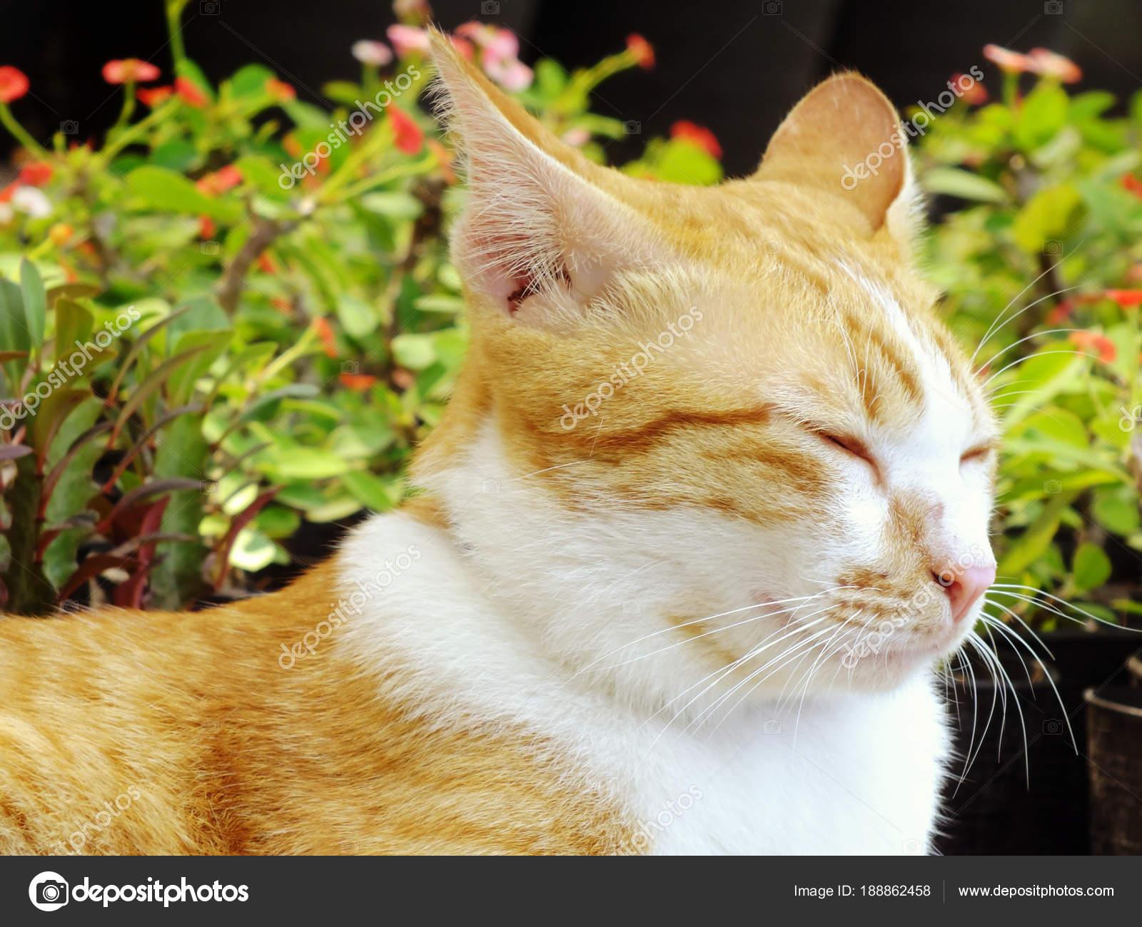 Brown Orange Tabby Cat Lying Floor — Stock Photo © may1985 #188862458