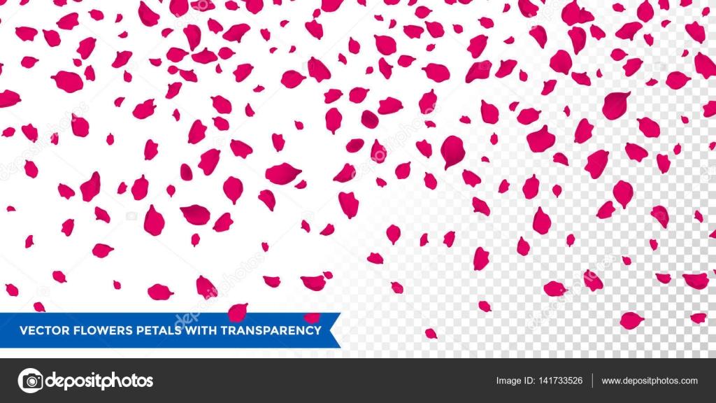 ベクトル透明な背景に花の花びら — ストックベクター © ronedale #141733526