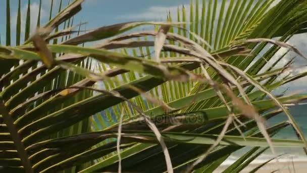 tropické pláže a palmami strom