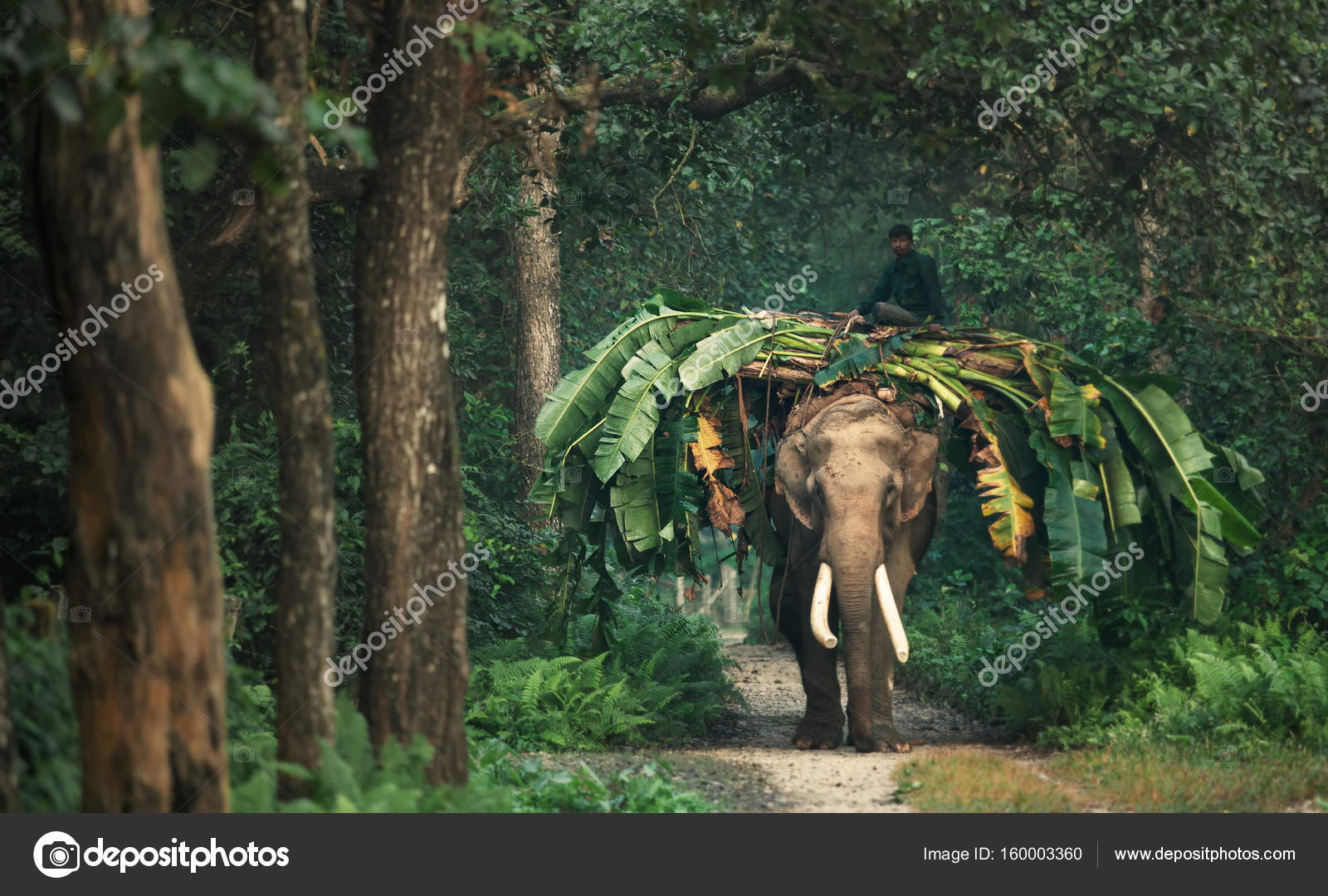 Indian Elephant In The Jungle  Stock Photo  Jankovoy -7746
