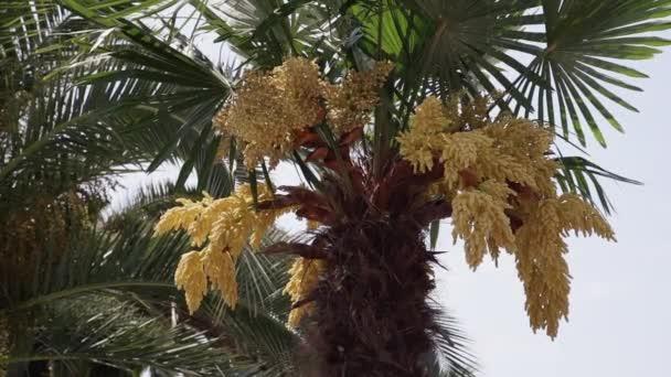 buja pálmafa a tengerparton alsó nézet. az égi háttérben. trópusi esőerdő fogalma