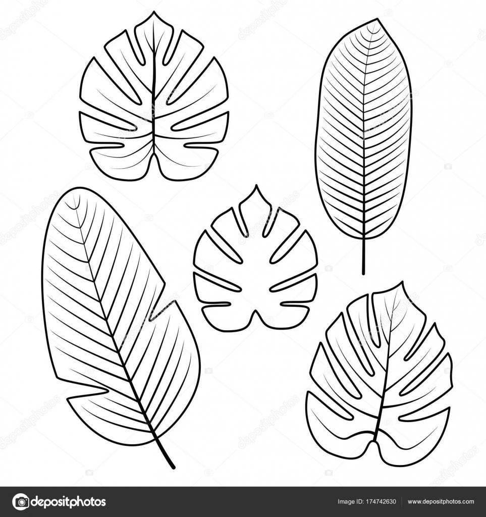 Colección de hojas tropicales. Ilustración de vector — Archivo ...