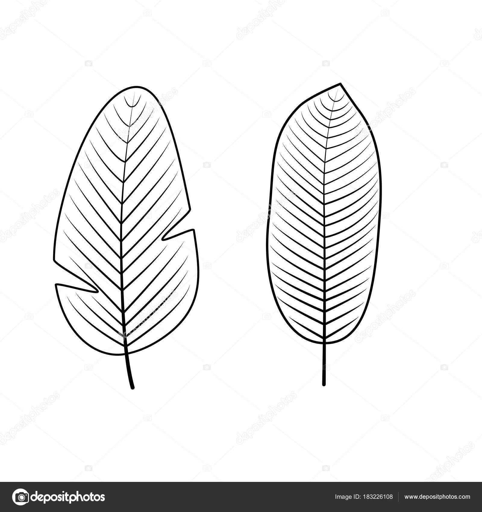 Colección de hojas tropicales. Ilustración de vector — Vector de ...