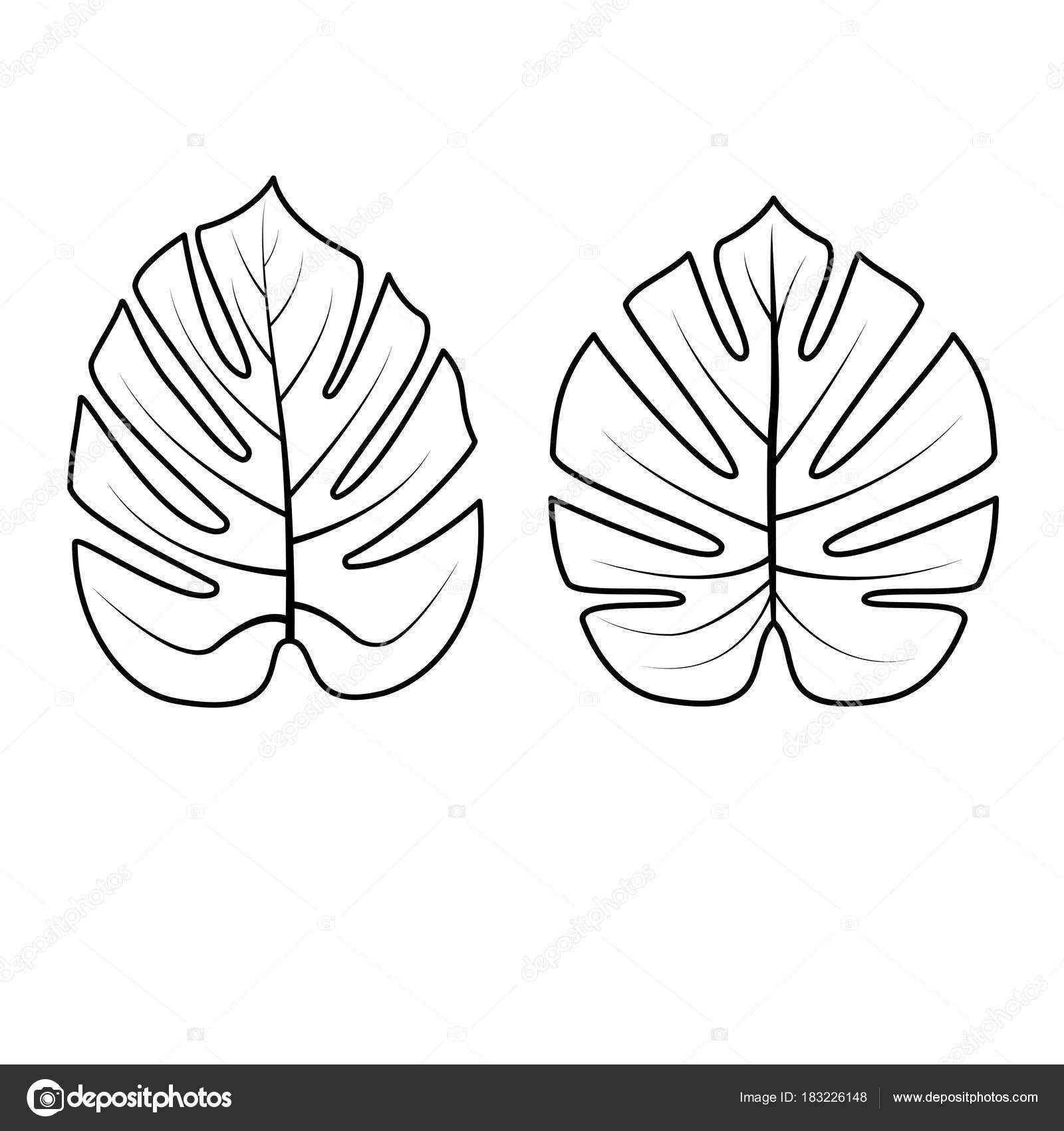 collection de feuilles tropicales illustration
