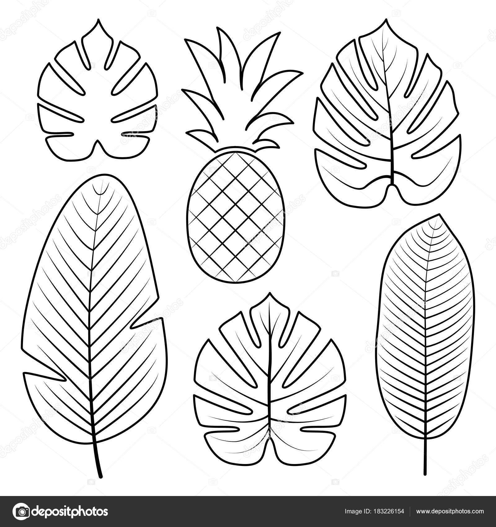 tropische bladeren collectie vectorillustratie