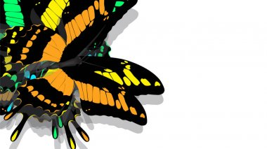 butterfly with black wings, Orange patterns