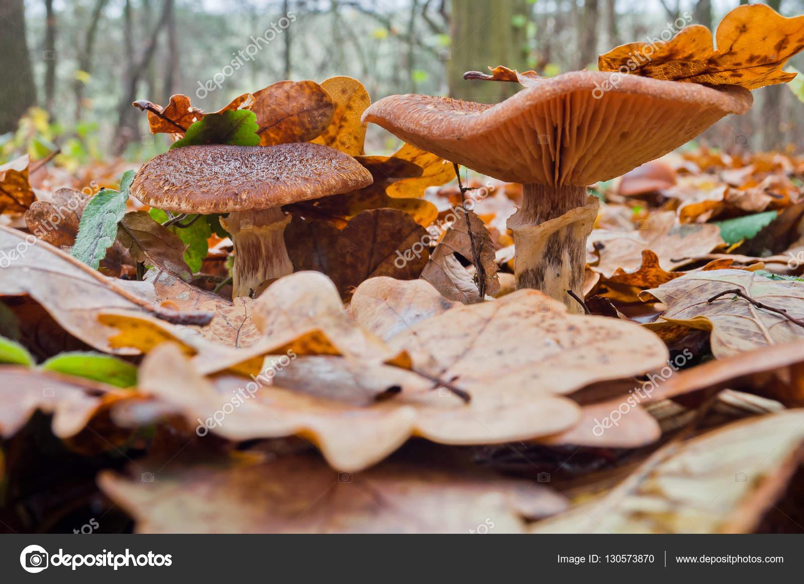 грибы осенние картинки