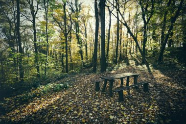 Benches in green forest
