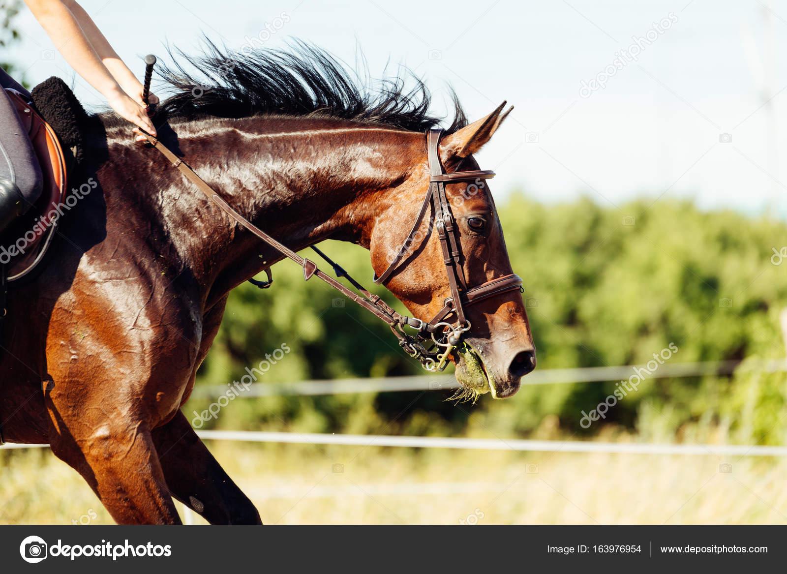 Obraz Konia Jazda Konna Skoki Przez Przeszkody Zdjęcie Stockowe