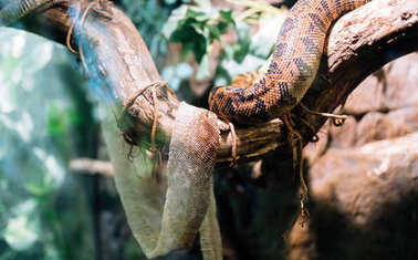 snake and its shedded skin