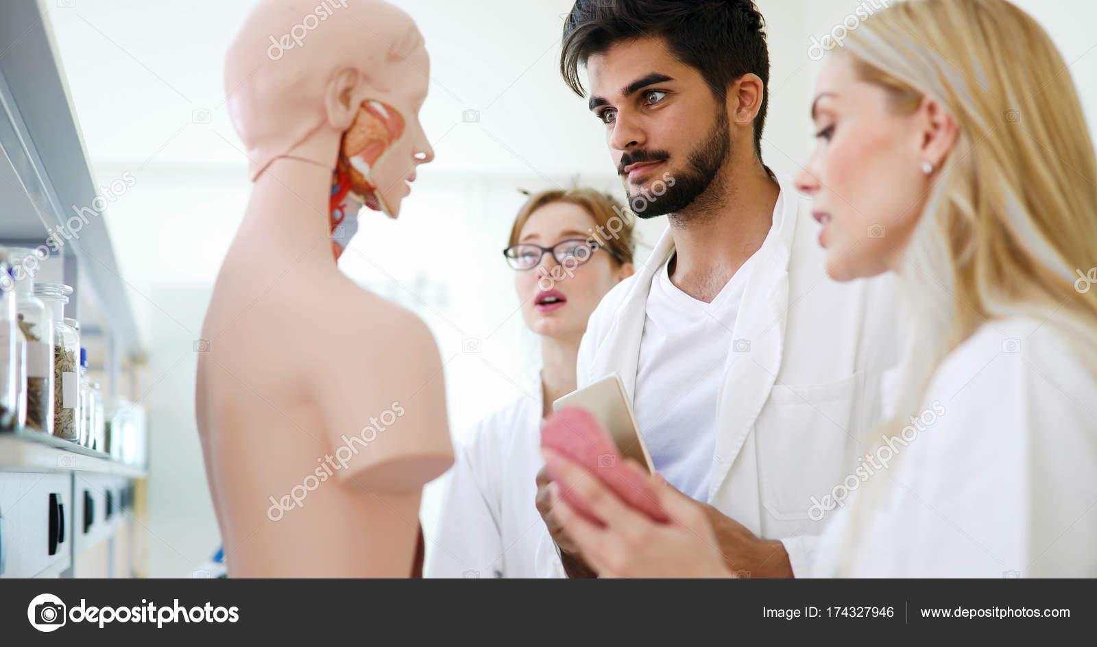Medizin untersuchen gemeinsam anatomisches Modell — Stockfoto ...
