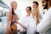 Fotografia Studenti di medicina esame modello anatomico