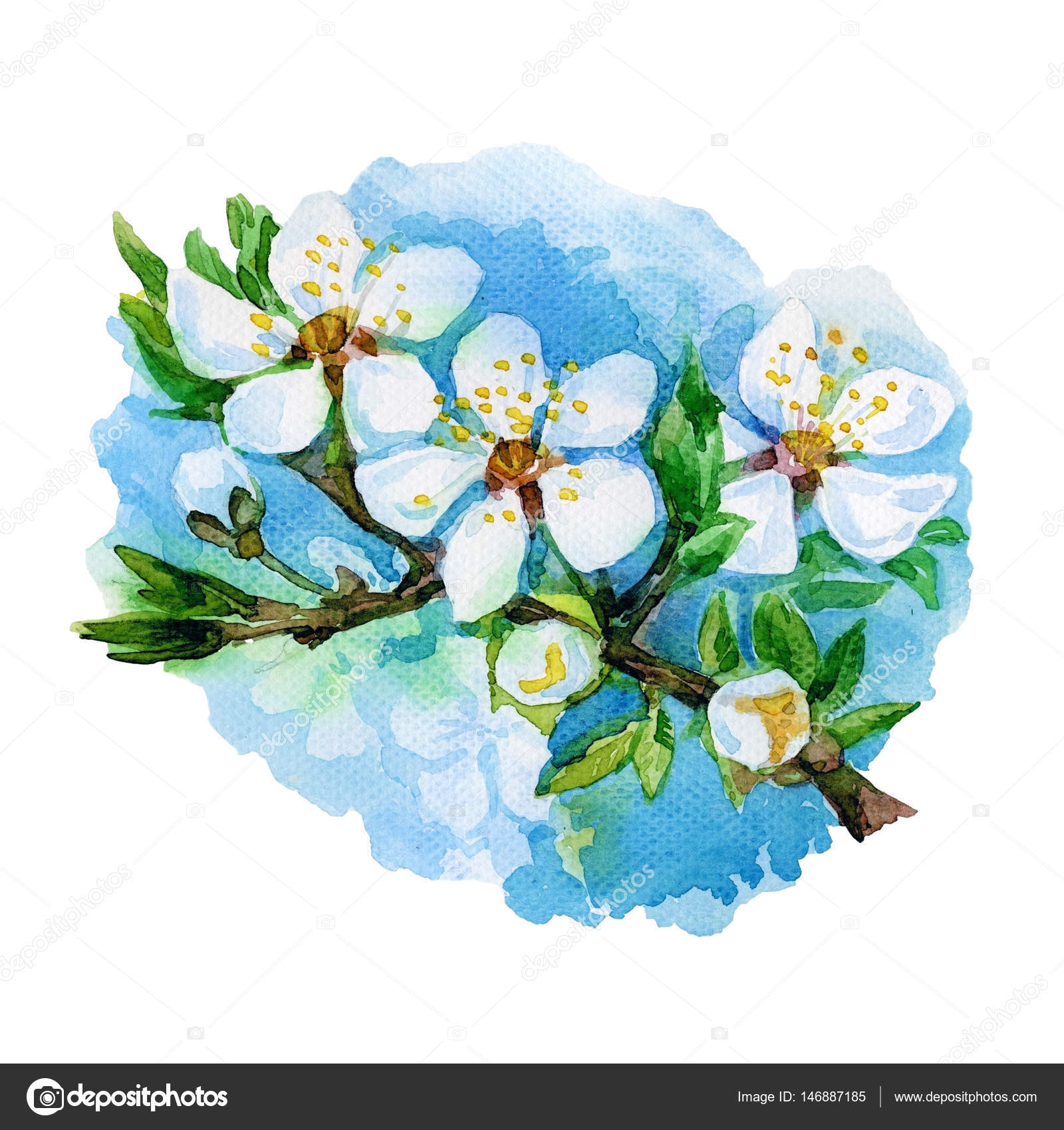 Watercolor Spring Flowers Stock Photo Svianola 146887185