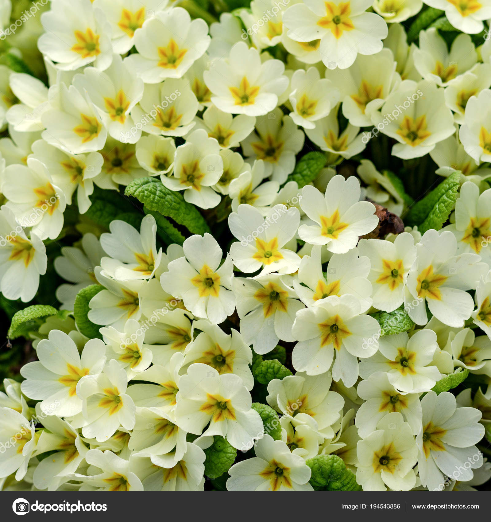 Bouquet Of White Flowers On A Flower Bed In Springtime Square