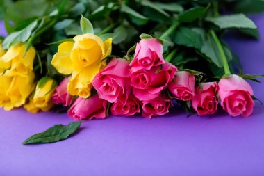 beautiful yellow and pink rose flowers